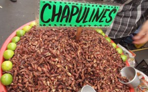 Chapilinas or Fried Grasshoppers